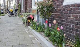 Utrecht krijgt er 180 nieuwe geveltuinen bij verspreid over de stad