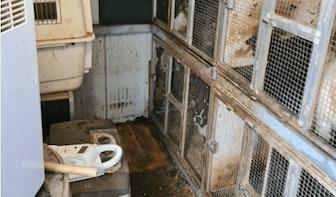Politie haalt 47 verwaarloosde honden en een ara uit Utrechtse woning