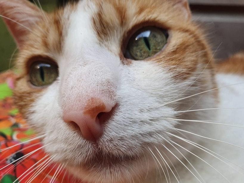 Stijging dierproeven bij Universiteit Utrecht en UMC; ook coronatests op huisdieren