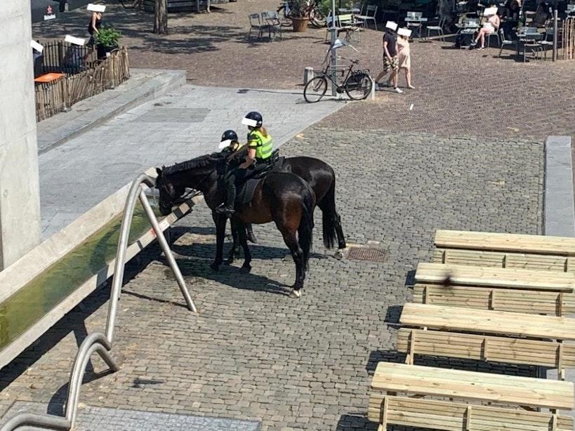 Gemeente Utrecht onderzoekt of dieren meegenomen kunnen worden in lokaal hitteplan