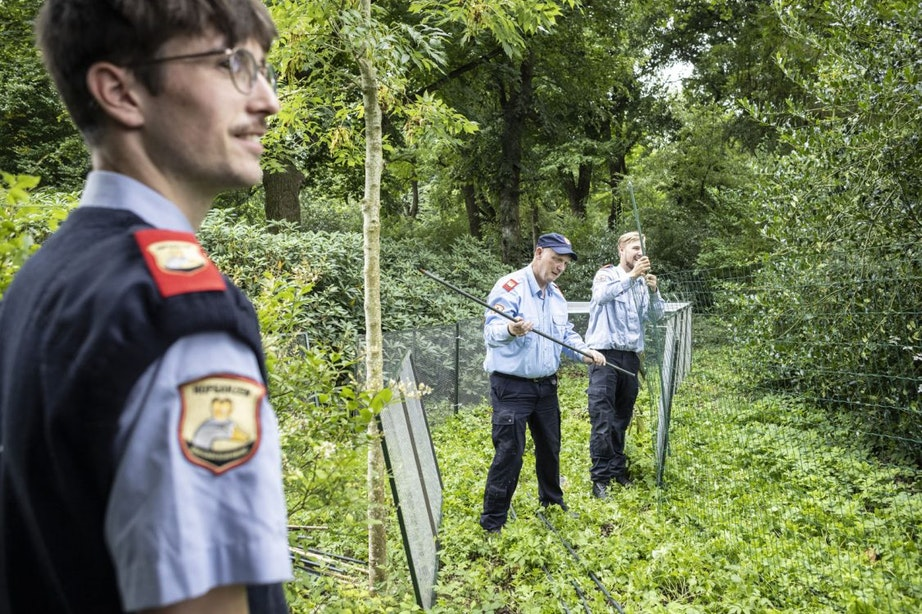 Foto's: Operatie om kippen en hanen te vangen in Julianapark in Utrecht
