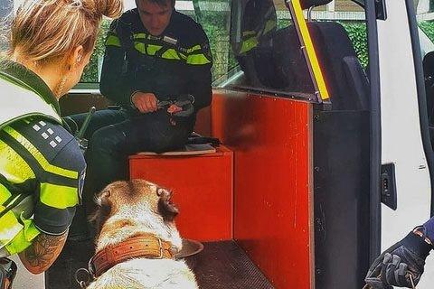 Hond zit al twee weken alleen in Utrechtse achtertuin terwijl bewoners genieten van vakantie